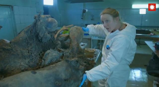 Metodom karbonskog datiranja naučnici su ustanovili da je mamut živeo pre oko 40.000 godina (FOTO: Smithsonian Channel)