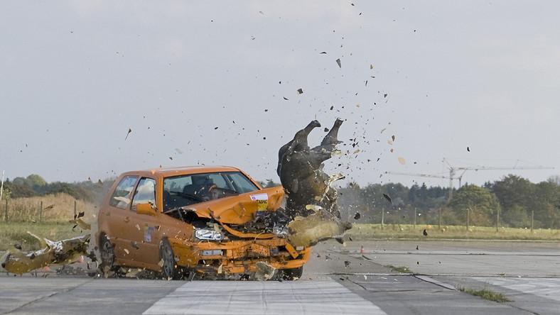 Zderzenie samochodu ze zwierzęciem