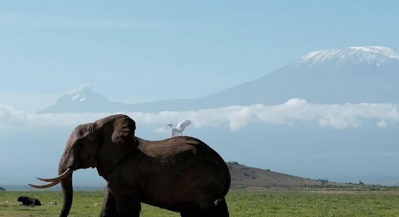 An elephant in Kenya's Amboseli National Park in front of Mount Kilimanjaro.