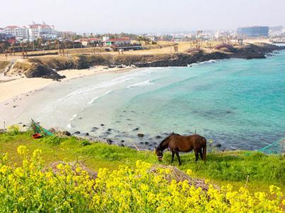 Wyspa Czedżu jest jednym z najpiękniejszych miejsc w Korei Południowej