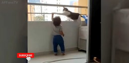 Dziecko chciało wspiąć się na barierkę balkonu. Zobaczcie, co zrobił ten kot!