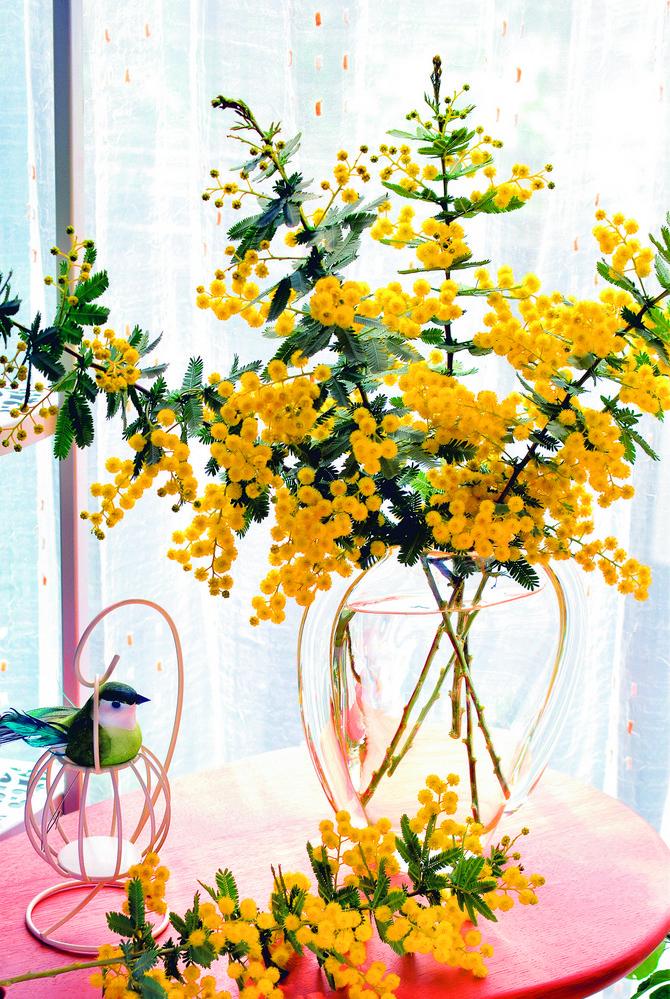 Od mimoza može da se napravi i lep venčić