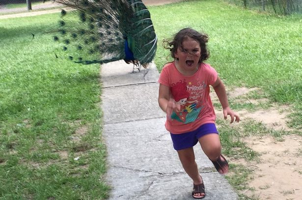Photo of a girl running from a peacock hits the internet and a million memes was made from it