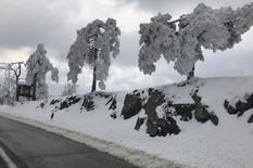 divcibare sneg foto snezana krstic (1)