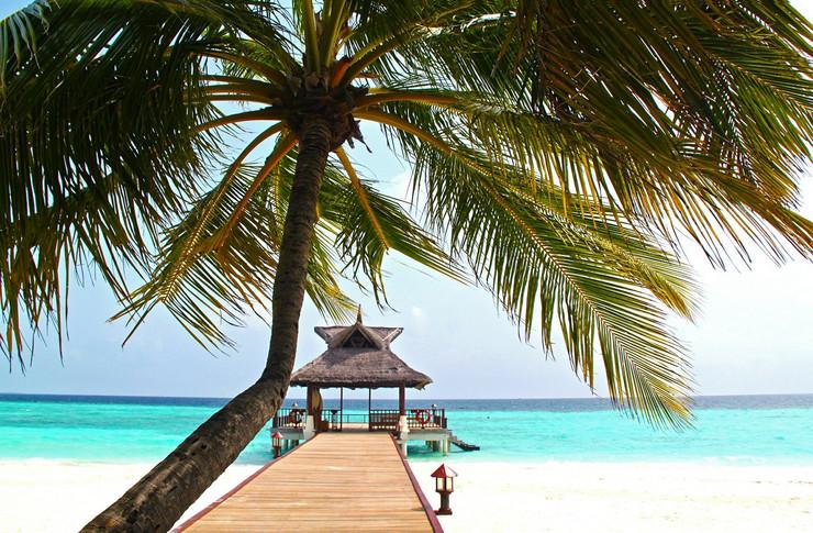 Maldivi pokrivalica