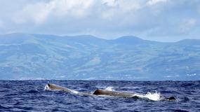 Archipelag wielorybów