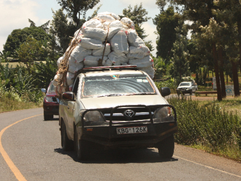 Pick-ups transporting miraa from Meru to the Wilson Airport for export.