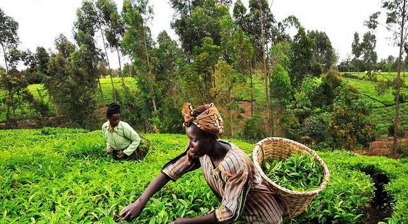 Go into farming; it's very lucrative – MP urges Ghanaians