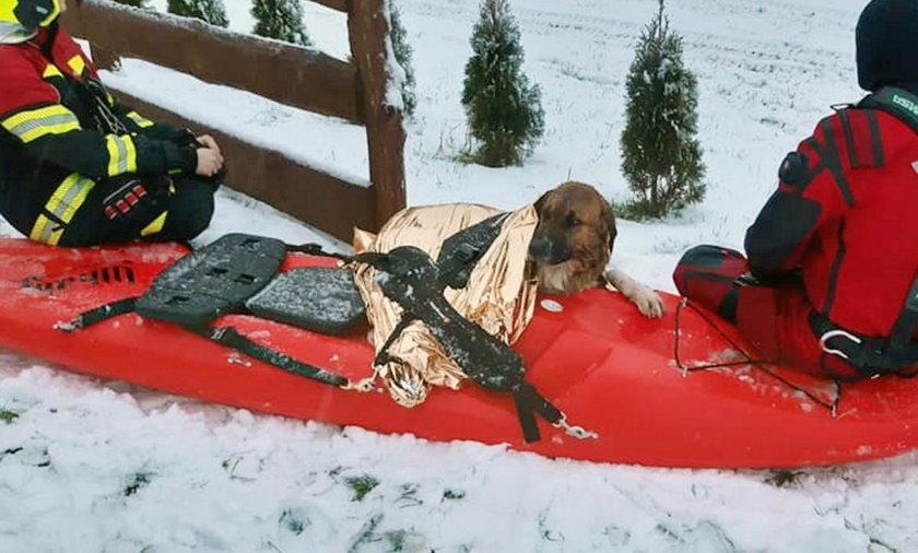 Strażacy uratowali psa tonącego w jeziorze