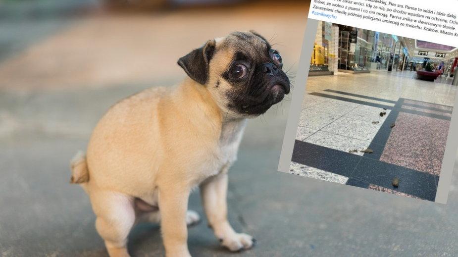 Właścicielka nie posprzątała po psie. W Galerii Krakowskiej
