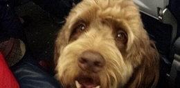 Pies zrobił kupę w rejsowym samolocie! Efekt?
