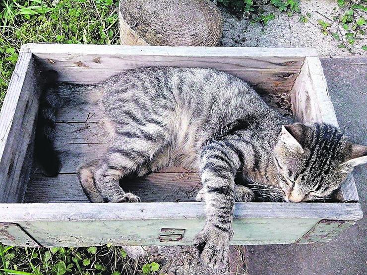 Kraljevo 02 - Jedna od stradalih mačaka