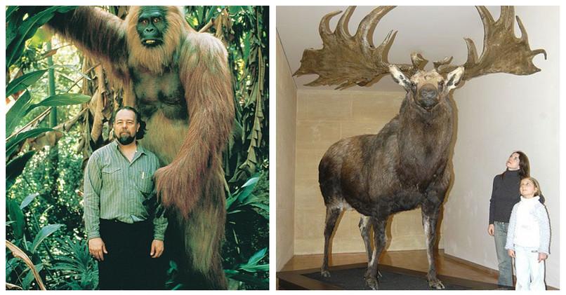 Aj takéto tvory kedysi žili na našej planéte. 9a323780d5b