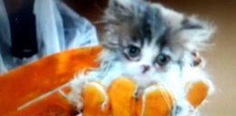50 kotów żyło w skandalicznych warunkach. Ich właściciel był poszukiwany listem gończym