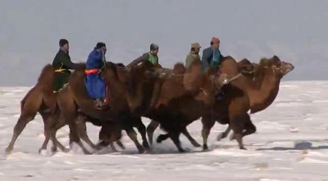 Trke kamila su omiljena zimska aktivnost Mongola