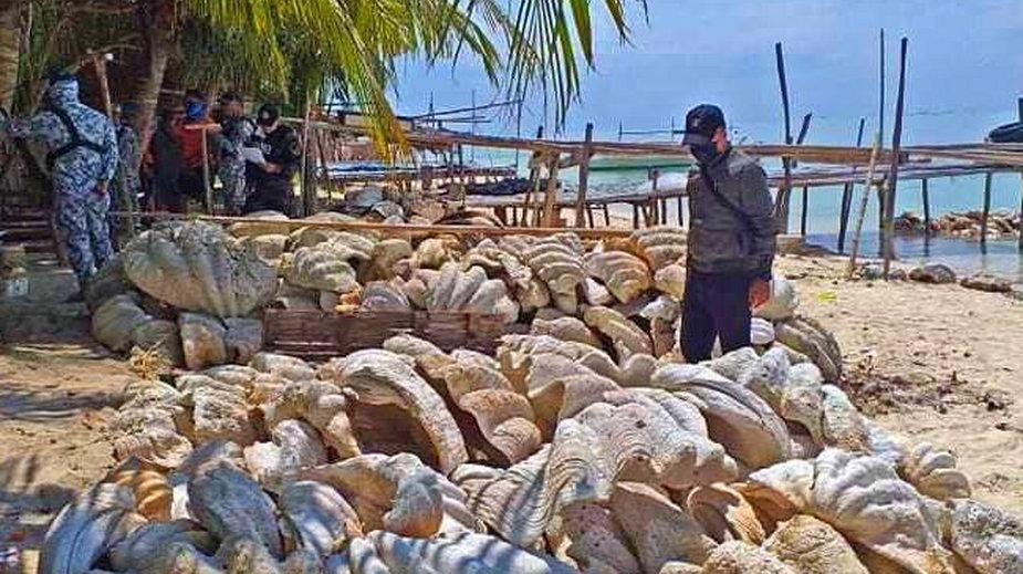 Czteroosobowa grupa chciała przemycić ok. 200 ton małży olbrzymich