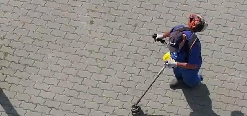 Koszą nawet beton! W Dąbrowie Górniczej urzędnicy doszli do absurdu