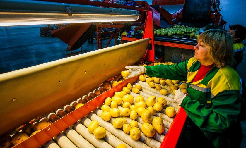 Fabryka, ziemniaki