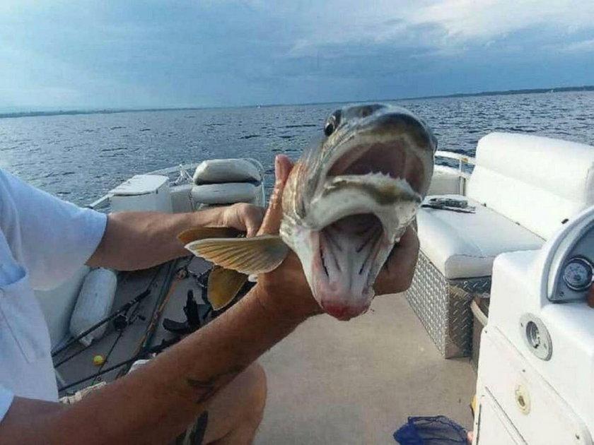 Szok! Kobieta złapała rybę z dwoma pyskami