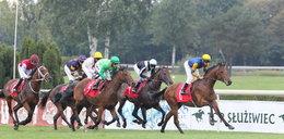 Zabili konie po wyścigu na Służewcu