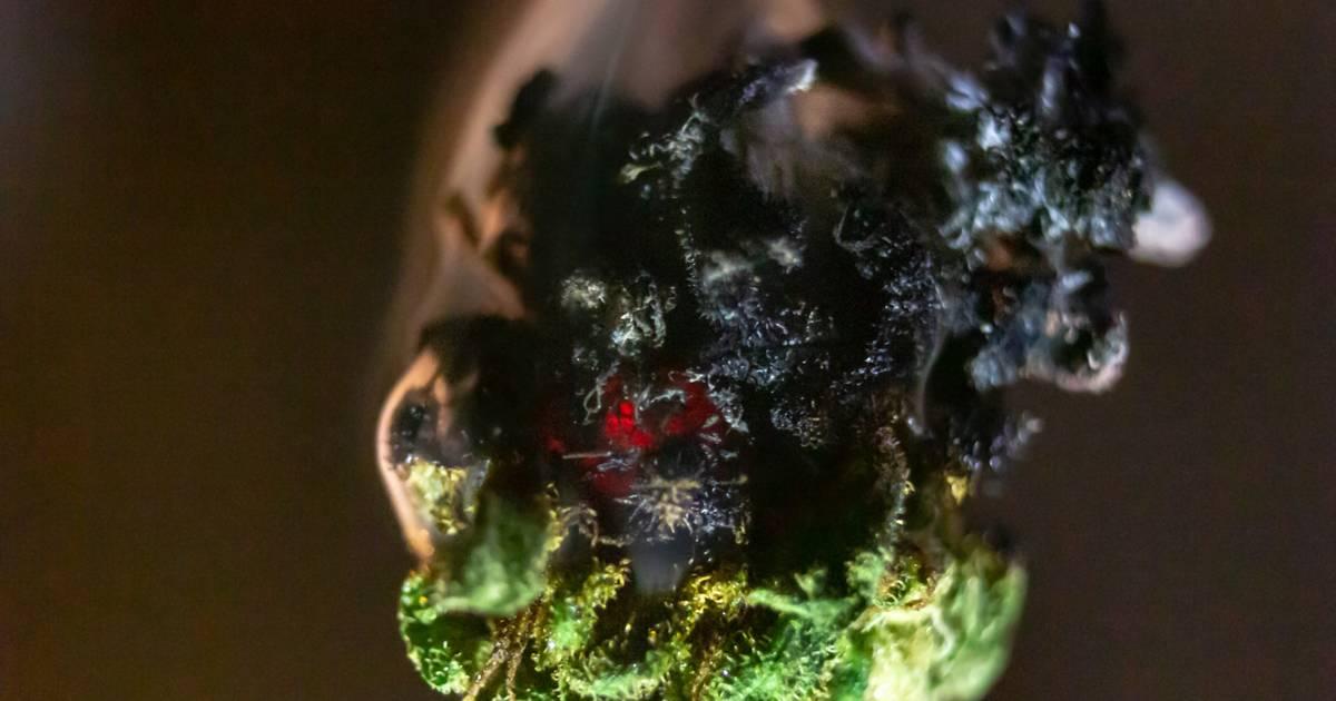 Olyan sok marihuánát égettek el Indiában, hogy a füst eltakarta a napot