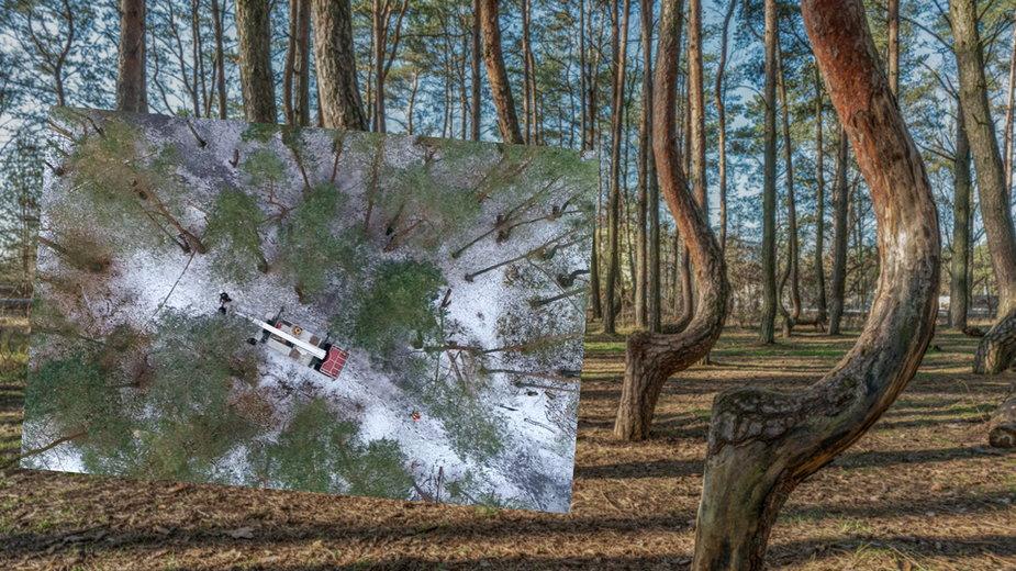 Krzywy Las dostanie drugie życie? Rozpoczęto projekt rewitalizacji