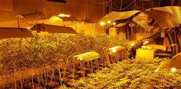 Wytwarzali narkotyki za 10 mln zł i kradli prąd