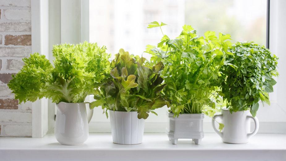 Zioła można uprawiać w donicy i w gruncie - geshas/stock.adobe.com
