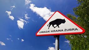"""Znaki ostrzegawcze """"Kraina Żubra"""" w okolicach Puszczy Białowieskiej"""