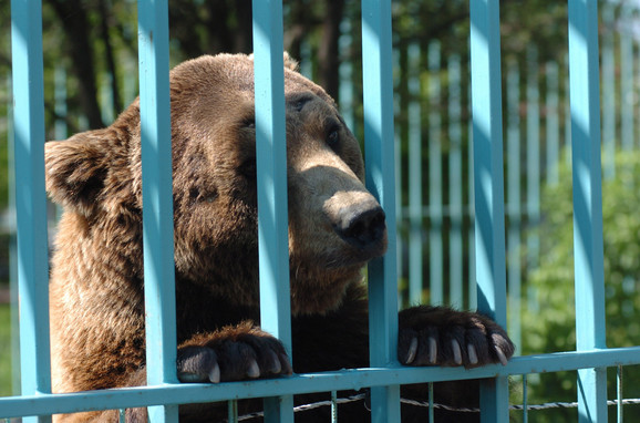 Medved Miša