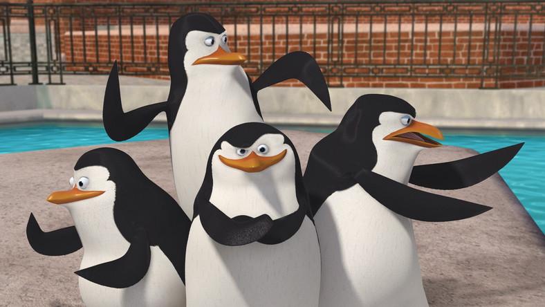 Pingwiny w akcji