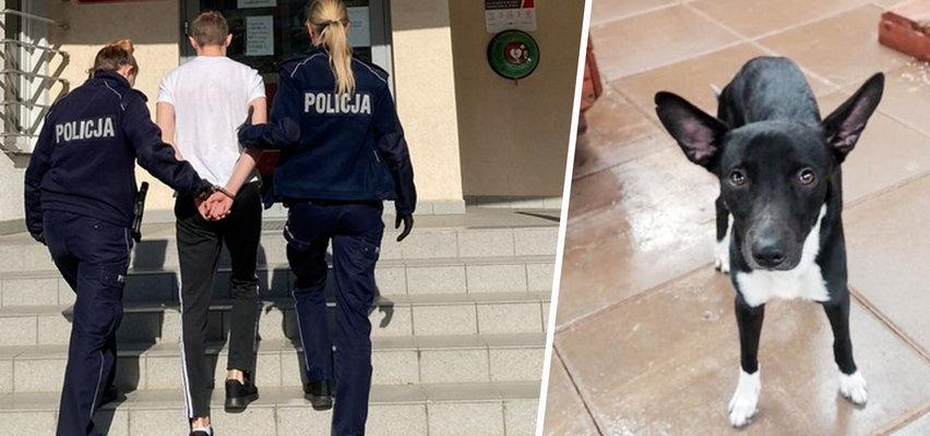 Patryk wsiadł z psem do windy i wtedy się zaczęło... Na szczęście wszystko się nagrało! Roman jest już bezpieczny