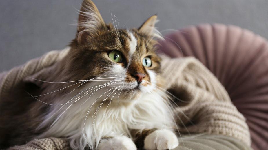 Długość życia kotów zależy od wielu czynników - Evrymmnt/stock.adobe.com