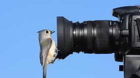 Jak rozpocząć przygodę z podglądaniem i fotografowaniem ptaków?