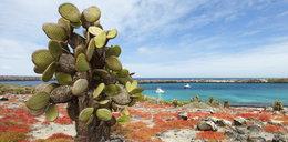 Wyspy Galapagos - słońce świeci tam przez cały rok