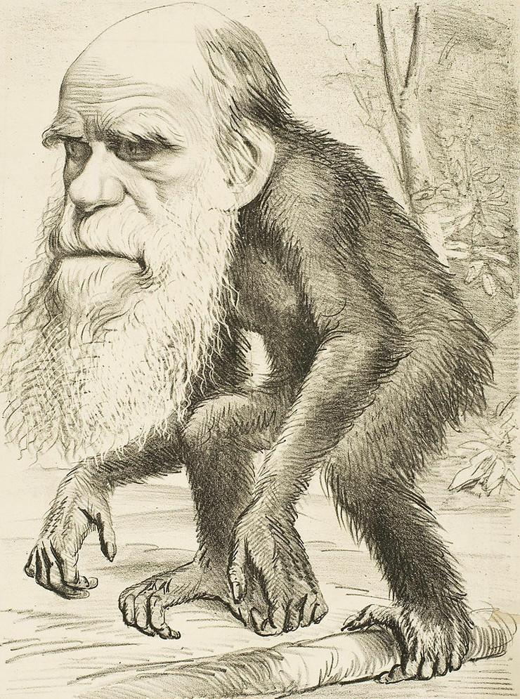 darvin02 foto Wikipedia