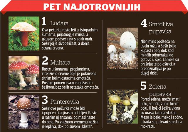 Pet najotrovnijih gljiva