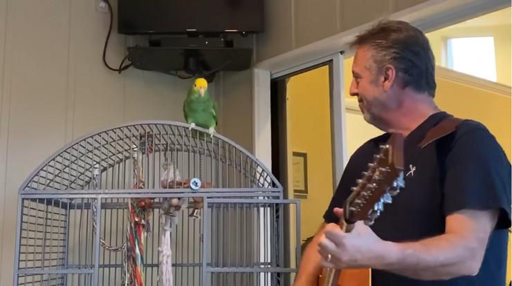 Papagaj Tiko