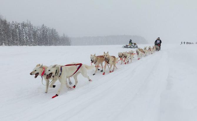 Iditarod trke