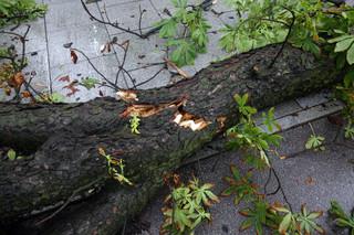 Kujawsko-pomorskie: Zerwane dachy, przewrócone drzewa i zalane piwnice