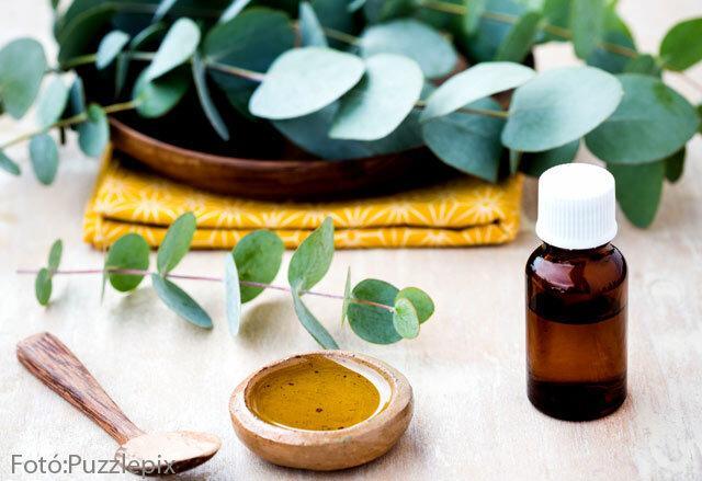 eukaliptuszolaj használata az ízületek kezelésében)