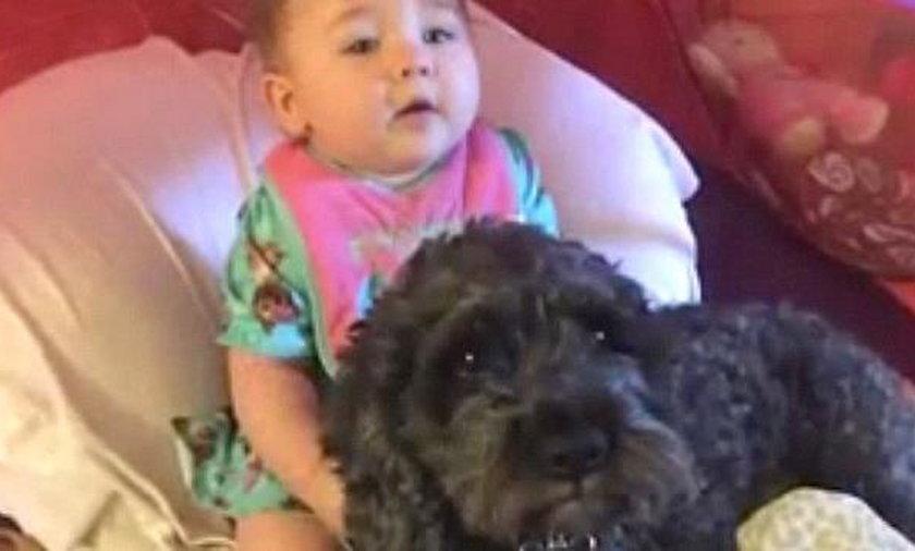 Ten pies zginął, ratując życie dziecka