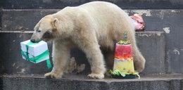 Huczna impreza w zoo. Misie kończą 5 lat!