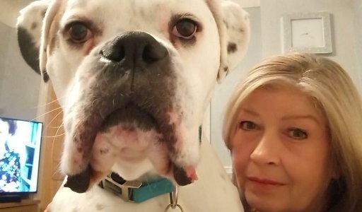Ten pies to wandal. Narobił w domu szkód na 44 tys zł! Na zdjęciach obraz nędzy i rozpaczy