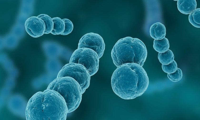 Paciorkowce to jedne z bakterii, które najczęściej prowadzą do sepsy.