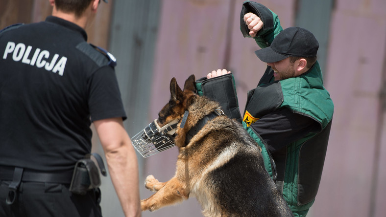 Tresura psów