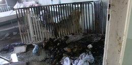 Pożar w szpitalu w Kutnie. Pacjent spalił się w łóżku