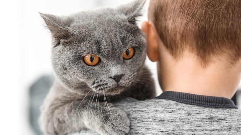 Oznaki, że dziecko stresuje kota