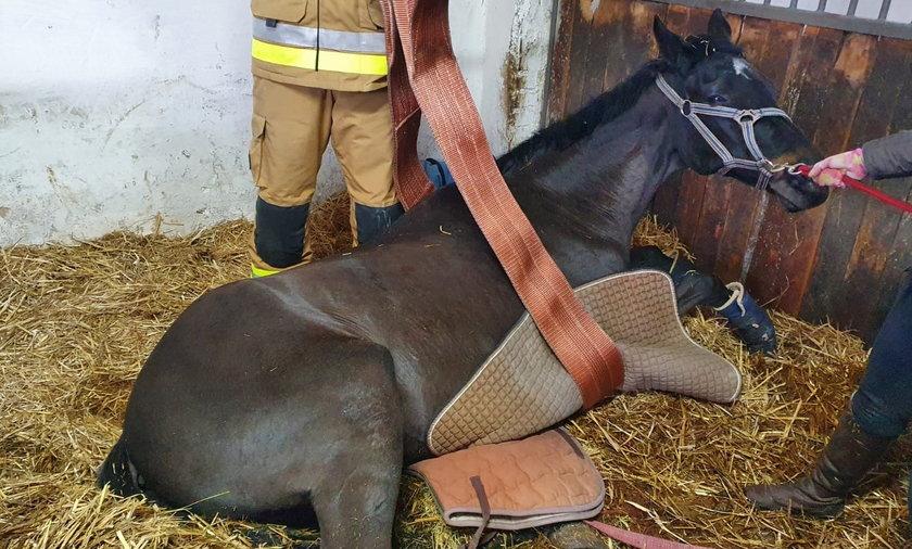 Strażacy z Gniezna ratowali konia.