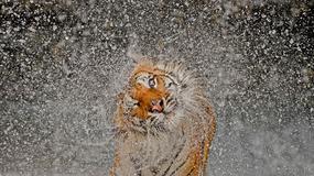 Najlepsze zdjęcia National Geographic Photography Contest 2012